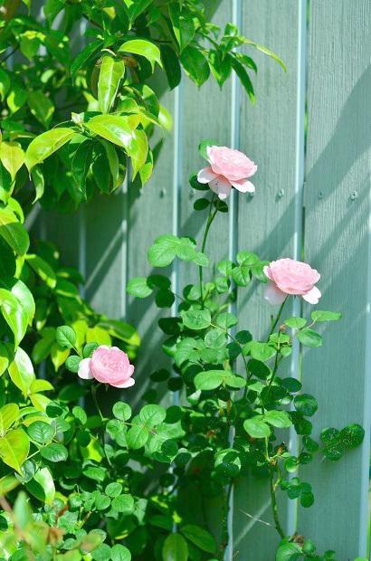 薔薇咲く庭_d0025294_16214321.jpg