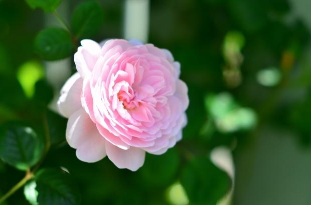 薔薇咲く庭_d0025294_16234452.jpg