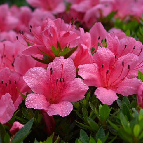 初夏の花 01_f0099102_13524458.jpg