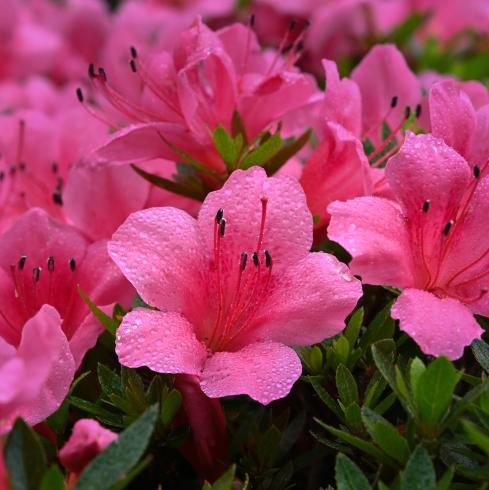 初夏の花 01_f0099102_13524972.jpg