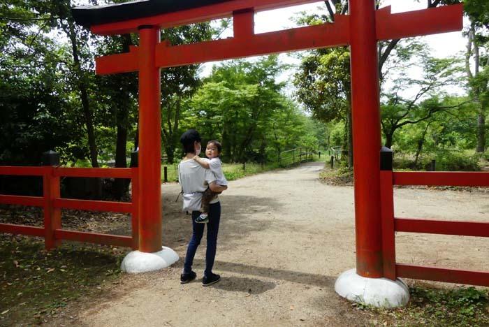京都府立植物園 散策_e0048413_20315814.jpg