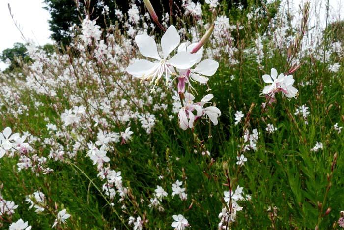 京都府立植物園 散策_e0048413_20321411.jpg