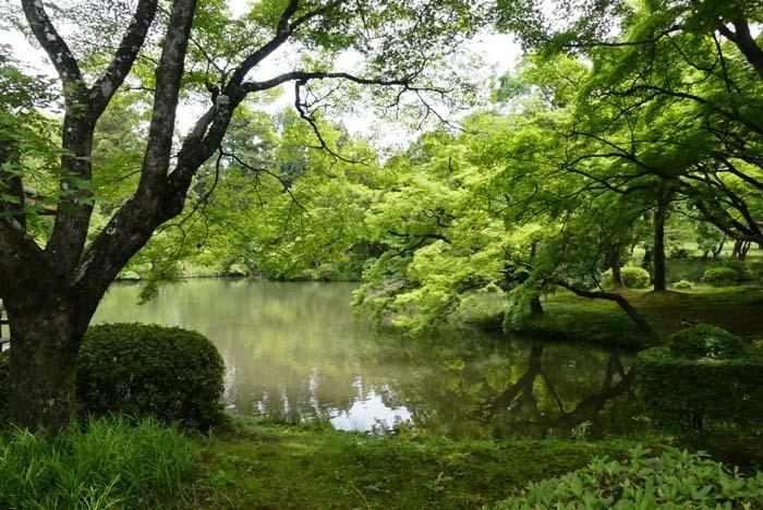 京都府立植物園 散策_e0048413_20322999.jpg