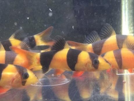200604 熱帯魚 めだか 金魚 水草_f0189122_14544563.jpeg