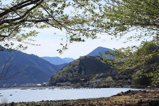 白石湖ボタン桜満開(撮影:4月19日)_e0321325_13334471.jpg