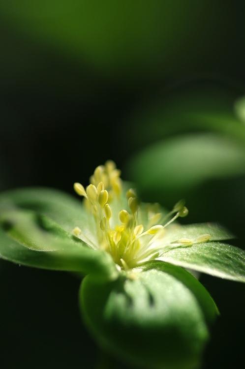 六月の花③_f0116528_20075227.jpg