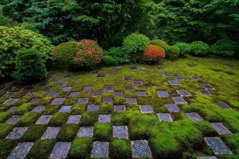 東福寺本坊庭園のサツキ_e0363038_11144105.jpg
