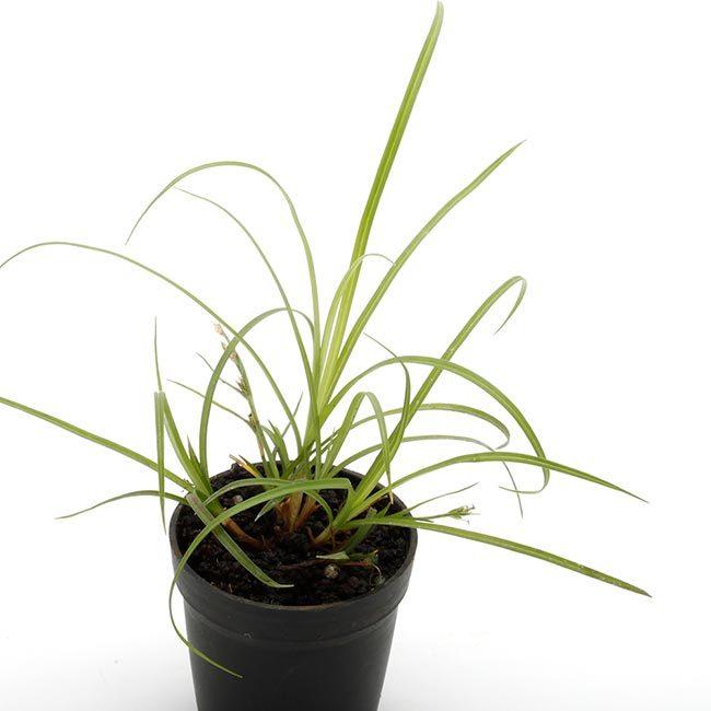 New arrival plants and FORESTA | 新掲載植物 可愛いシダやネペンテスなどなどとフォレスタに関して_d0376039_19031561.jpg