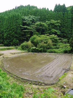 米作りの挑戦(2020) 田植え 今年は昨年よりもさらに10日早い田植えです!(後編)_a0254656_17314243.jpg