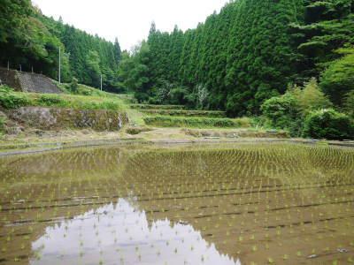 米作りの挑戦(2020) 田植え 今年は昨年よりもさらに10日早い田植えです!(後編)_a0254656_17364285.jpg
