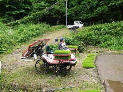米作りの挑戦(2020) 田植え 今年は昨年よりもさらに10日早い田植えです!(後編)_a0254656_17411082.jpg
