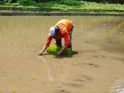 米作りの挑戦(2020) 田植え 今年は昨年よりもさらに10日早い田植えです!(後編)_a0254656_17440233.jpg
