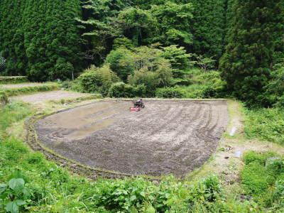 米作りの挑戦(2020) 田植え 今年は昨年よりもさらに10日早い田植えです!(後編)_a0254656_17561744.jpg