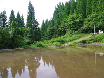 米作りの挑戦(2020) 田植え 今年は昨年よりもさらに10日早い田植えです!(後編)_a0254656_18042437.jpg