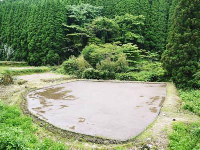 米作りの挑戦(2020) 田植え 今年は昨年よりもさらに10日早い田植えです!(後編)_a0254656_18110470.jpg