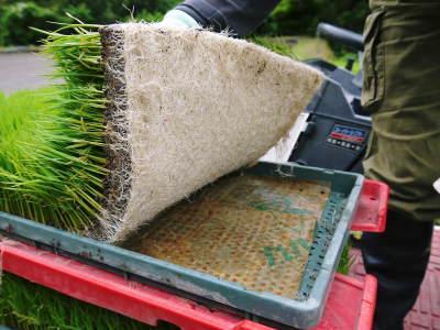 米作りの挑戦(2020) 田植え 今年は昨年よりもさらに10日早い田植えです!(後編)_a0254656_18175545.jpg