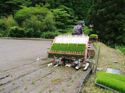 米作りの挑戦(2020) 田植え 今年は昨年よりもさらに10日早い田植えです!(後編)_a0254656_18222861.jpg