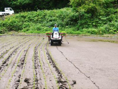 米作りの挑戦(2020) 田植え 今年は昨年よりもさらに10日早い田植えです!(後編)_a0254656_18240924.jpg