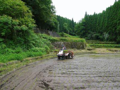 米作りの挑戦(2020) 田植え 今年は昨年よりもさらに10日早い田植えです!(後編)_a0254656_18254289.jpg