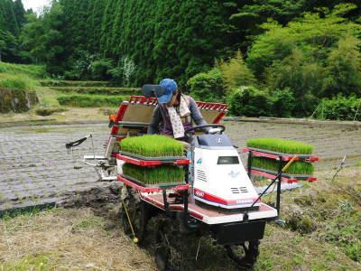 米作りの挑戦(2020) 田植え 今年は昨年よりもさらに10日早い田植えです!(後編)_a0254656_18275528.jpg