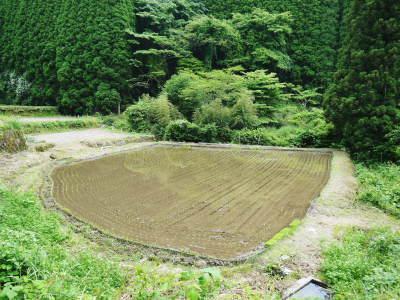 米作りの挑戦(2020) 田植え 今年は昨年よりもさらに10日早い田植えです!(後編)_a0254656_18302050.jpg