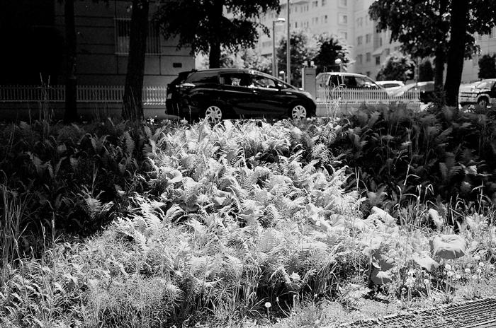 歯朶植物と白ライラックと紫陽花_c0182775_16565969.jpg