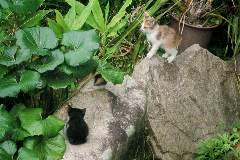 猫が増える季節です_f0189086_18205211.jpg