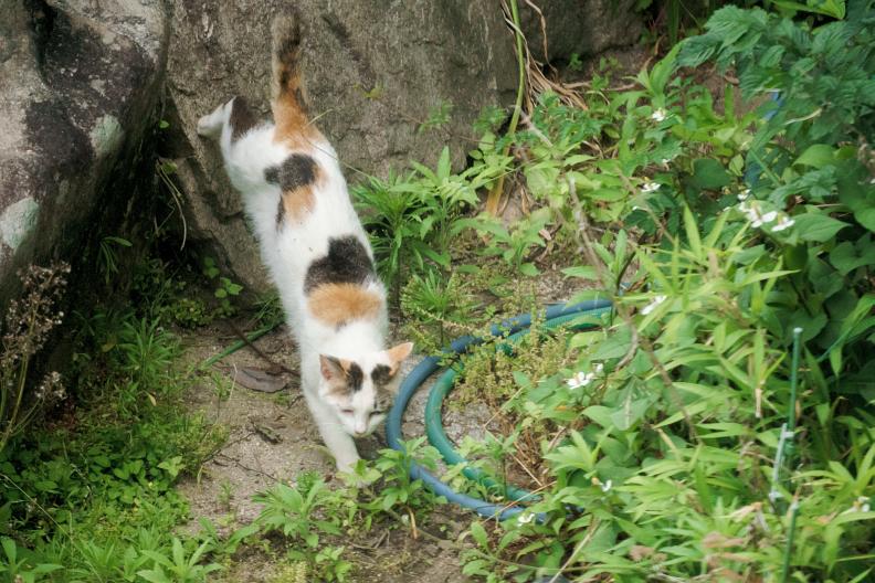 猫が増える季節です_f0189086_18234104.jpg