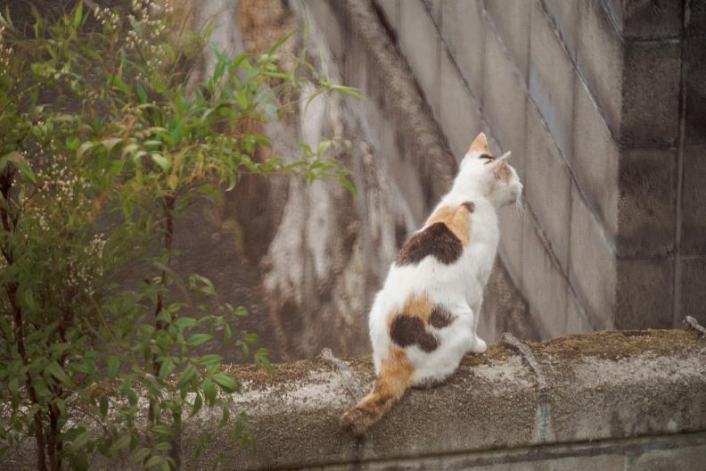 猫が増える季節です_f0189086_18241082.jpg