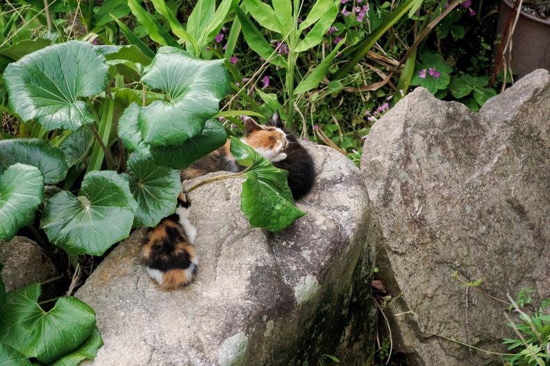 猫が増える季節です_f0189086_18261687.jpg