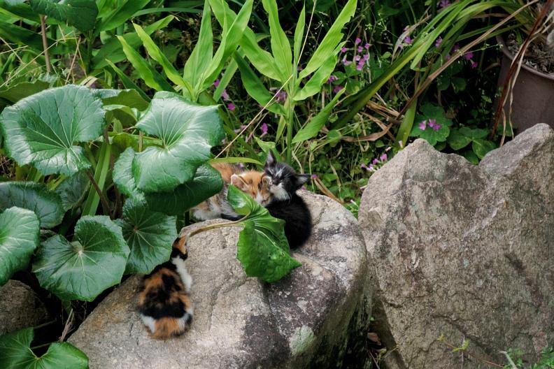 猫が増える季節です_f0189086_18264735.jpg