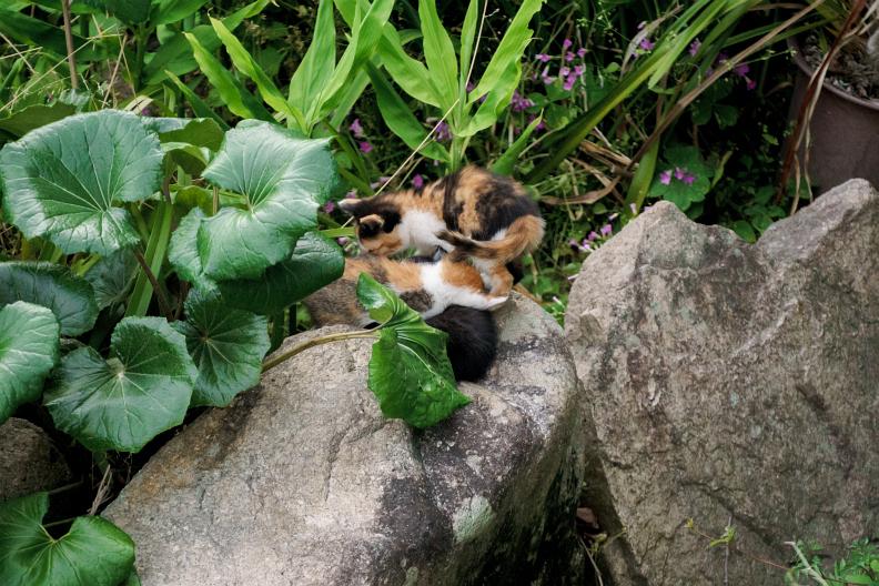 猫が増える季節です_f0189086_18273600.jpg