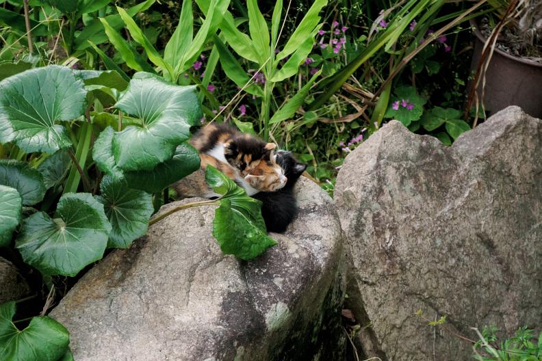 猫が増える季節です_f0189086_18281893.jpg