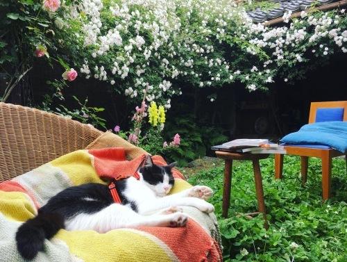 薔薇の庭とノイと出会った日のこと。_d0077603_11212357.jpg