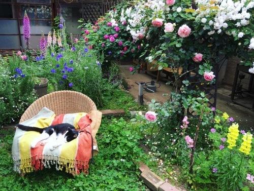 薔薇の庭とノイと出会った日のこと。_d0077603_11213822.jpg