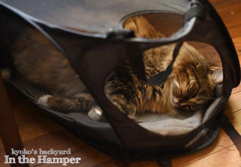 ハンパーの中で眠る猫にいたずら?したら_b0253205_02530651.jpg