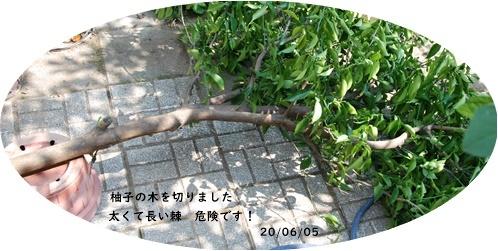 6月・・・_c0051105_15065881.jpg