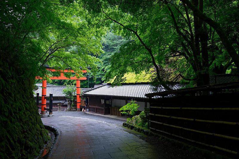 雨の日の愛宕街道寸景_f0032011_18340036.jpg