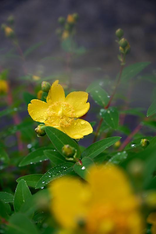 雨の日の愛宕街道寸景_f0032011_18340127.jpg