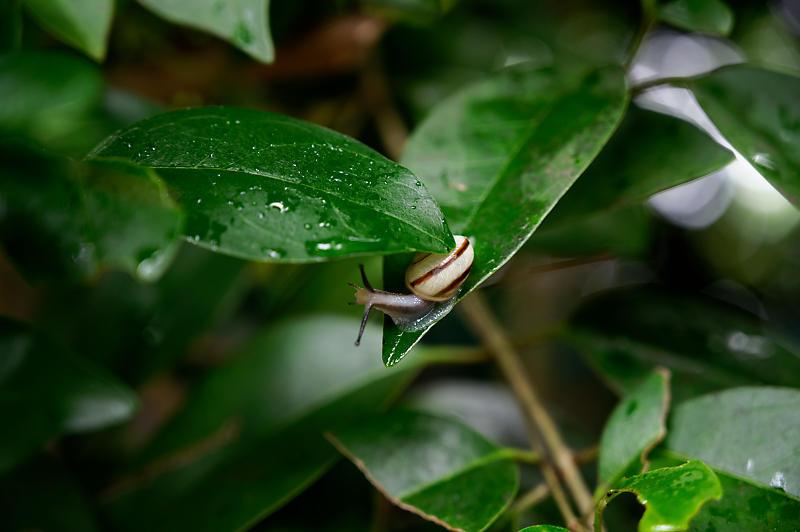雨の日の愛宕街道寸景_f0032011_18371148.jpg