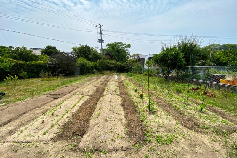 田舎暮らしは畑作りに始まり_e0029115_07070534.jpg