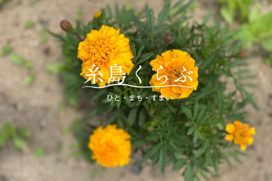 田舎暮らしは畑作りに始まり_e0029115_07075538.jpg