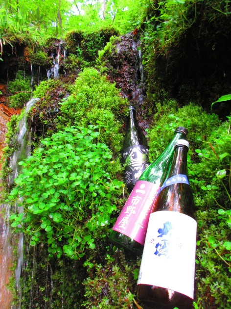 三蔵夏酒揃いました!_b0140235_16533076.jpg