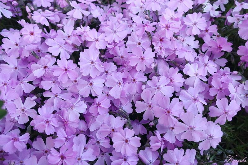 庭の花_a0353839_20293913.jpg