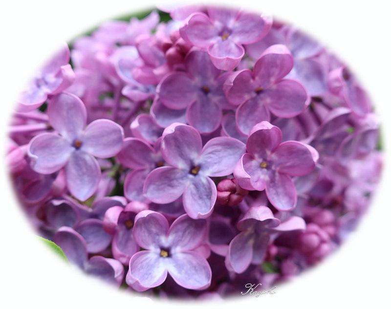 庭の花_a0353839_20315841.jpg