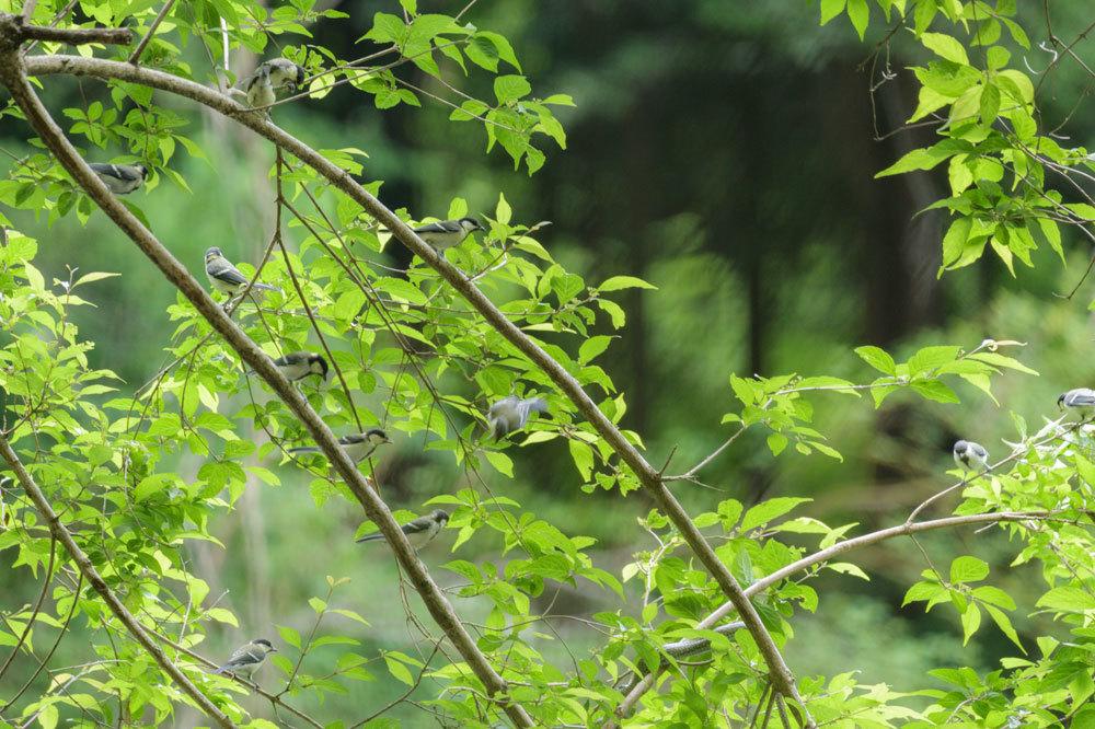 幼鳥Ⅱ_b0036743_17585837.jpg