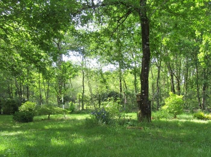 初夏の緑 木洩れ陽_b0287748_04012420.jpg