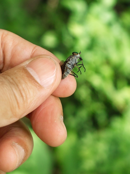 コロナ感染対策・・・キイチゴと天然カルガモ米づくり_d0005250_181208.jpg