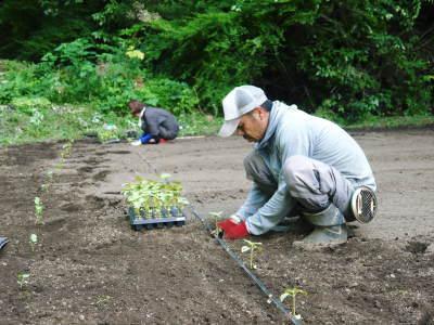 菊池水源産エゴマ 令和2年の栽培スタート 良い苗を育てるための選び抜く播種作業 今年も無農薬栽培です_a0254656_18530573.jpg