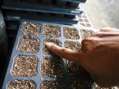 菊池水源産エゴマ 令和2年の栽培スタート 良い苗を育てるための選び抜く播種作業 今年も無農薬栽培です_a0254656_19233851.jpg